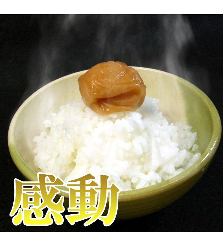 佐賀県 (選べる精米) 新米 1等 さがびより 5kg×2袋 平成25年度産