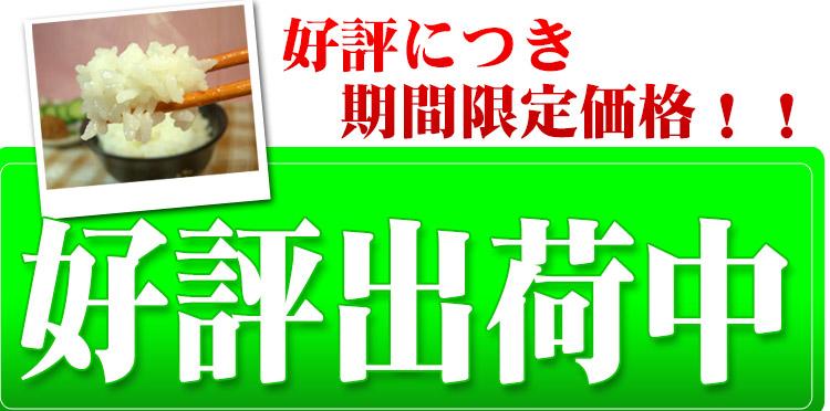 新米出荷 愛知県 白米 こしひかり 10kg 平成25年度